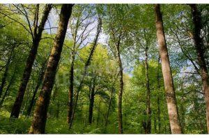 Balade autour de Saint-Germain-le-Rocheux @ Carrefour St Hubert en forêt de Châtillon