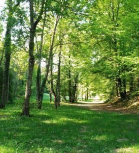 """Conférence """"Sylvothérapie, les bienfaits de l'arbre et de la forêt"""" @ Salle Roidot à Aignay-le-Duc"""